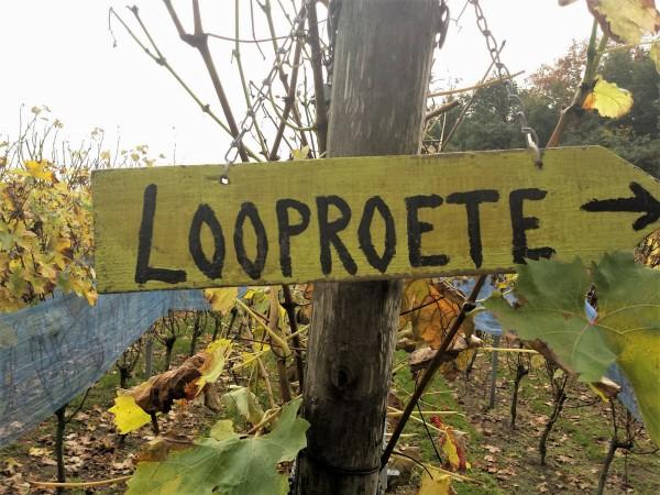 Wijngaard de Zessprong in Joppe